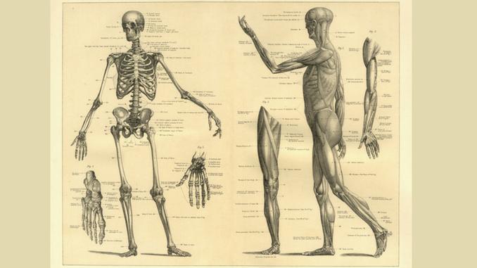 MuscleI